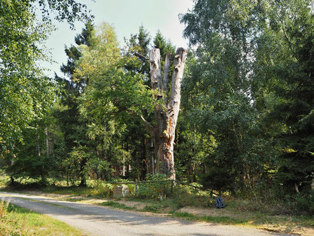 Der Komturhof ist sehr gut vom Klosterwanderweg oder dem Naturlehrpfad zu erreichenAuf dem Weg vom Kloster Himmelpforte bogen die Mönche an der Mönchsbuche Richtung Darlingerode ab nahmen im Dorf die Mönchsgasse, um die dortigen Klosterhöfe zu erreichen.