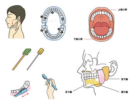 看護師 ナース 看護技術 基礎看護学 口腔ケア 歯磨き 歯科 歯ブラシ 解剖生理 医療 メディカル 挿絵 イラスト 書籍 雑誌 本
