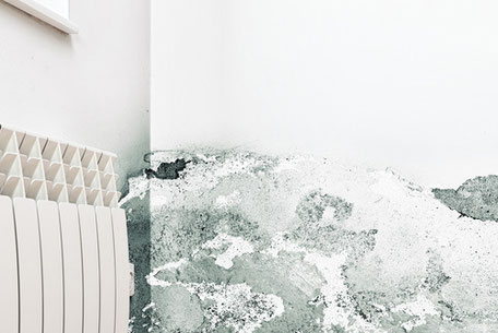 Schimmelbildung an feuchten Wänden