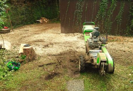Die Fräsmaschine kommt meist direkt nach der erfolgreichen Baumfällung zum Einsatz (Hier in Köln)..
