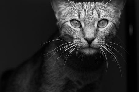 Chat gardé par des home-sitters