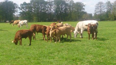Tierarzt Himmelpforten Großtiere Kühe Pferde