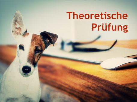 Lustiger Terrier macht die theoretische Sachkundeprüfung Hundehalter