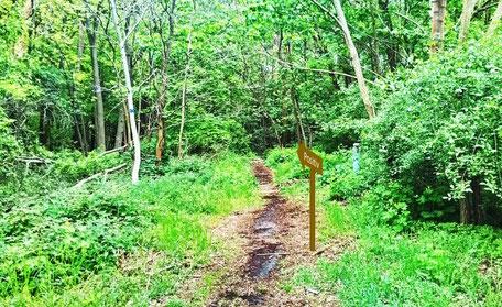 Vergleichbar mit einem kleinen Trampelpfad im Wald sind die neuronalen Bahnen ausgebaut. Mit Hilfe des 10xDrehs wird daraus eine gut befahrene Autobahn.