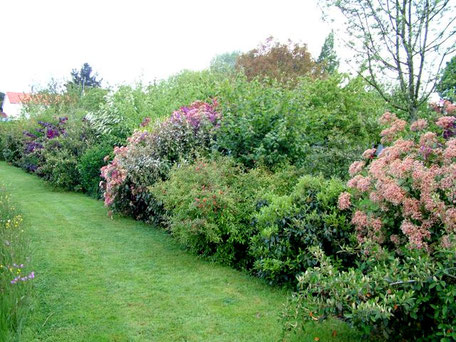 Exemple de haie libre - Crédit photo : Le mur végétal