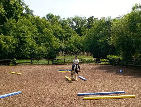 Pferd & Reiter konzentriert im Dualaktivierungs-Parcours