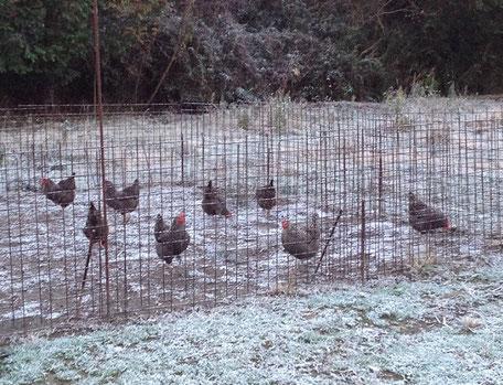 凍てつく朝。でも小屋の扉を開けると一斉にザッキ―達が飛び出していきます。