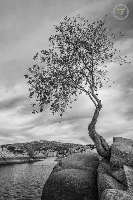 Watson Lake Arizona