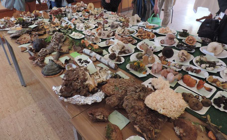 Pilzausstellung im Forsthaus Jena