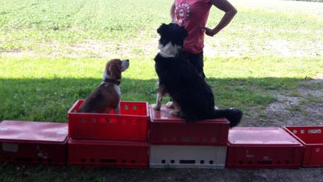 Gerätearbeit Hundsschui Feuerer