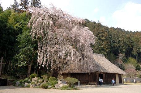 高麗神社内にある重要文化財の高麗家住宅