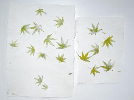 Amberbaum Büttenpapier A4 und A5