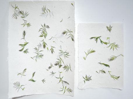 Sibirische Fiederspiere Blätter A4 und A5