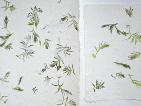 Sibirische Fiederspiere Blätter A4 und A5 - Detail