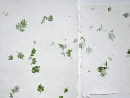 Szechuanpfeffer Büttenpapier A4 und A5 - Detail