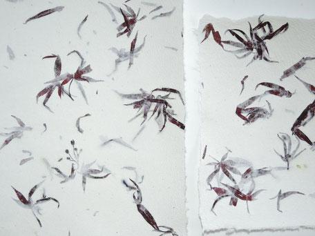 Büttenpapier A4 und A5 mit japanischem Ahorn - Detail