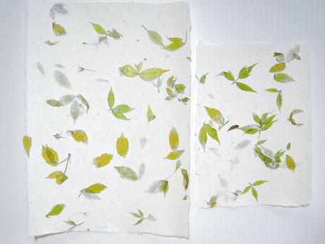 Buche oder Ahorn Büttenpapier A4 und A5