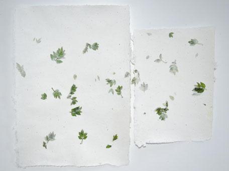 Szechuanpfeffer Büttenpapier A4 und A5