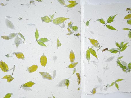 Buche oder Ahorn Büttenpapier A4 und A5 - Detail
