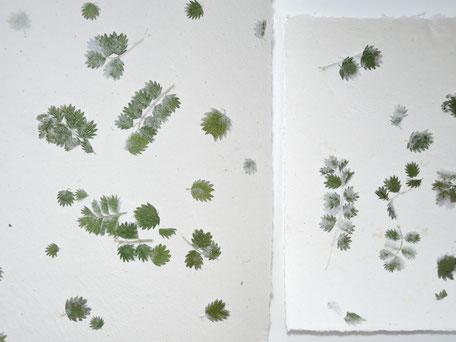 Pimpinelle Büttenpapier A4 und A5 - Detail