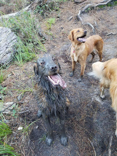 Morristown Dog  trainer Covered in MUD