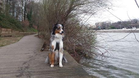 Chien île de la jatte, promener son chien à Levallois Perret ou Paris. Parc à chien.