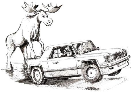 Kung auf der Kofferraumklappe des Autos