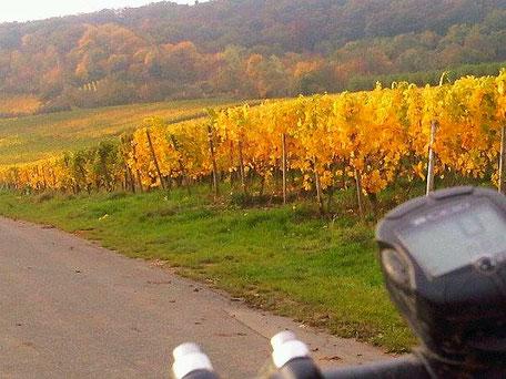 Herbststimmung - Farbenfreude genossen auf einer MTB Tour zum Niederwald