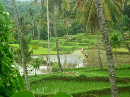Petani Lokal di Lombok Utara