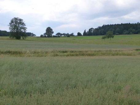 Blick entlang der Limeslinie auf der Markung von Schloßau