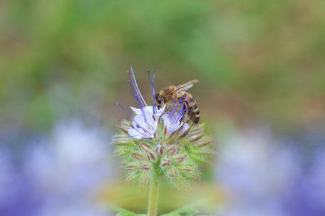 Starten Sie Ihr CSR Projekt - Bienenpatenschaft im Westerwald