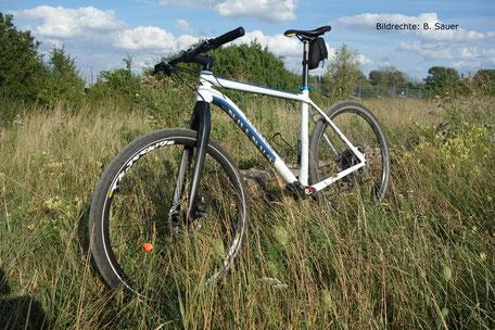 Carbon Gabel Starrbike 495mm Steckachse Bildrechte B. Sauer