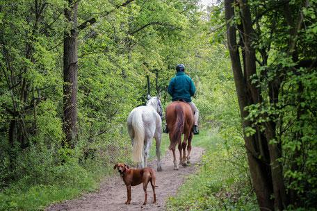 reiten-durch-die-natur-pferde
