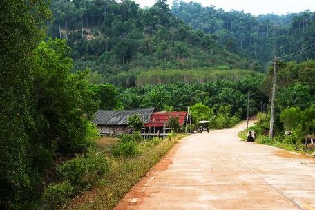 Strasse durch den Dschungel auf Koh Phangan
