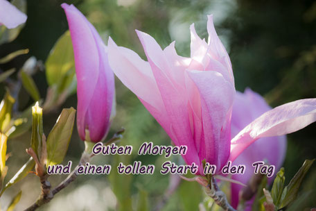 grusskarte-guten-morgen-magnolien-blueten