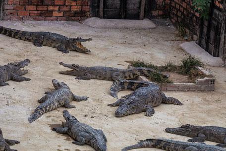 krokodil-farm-siem-reap-kambodscha