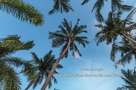 grusskarte-guten-morgen-palmen