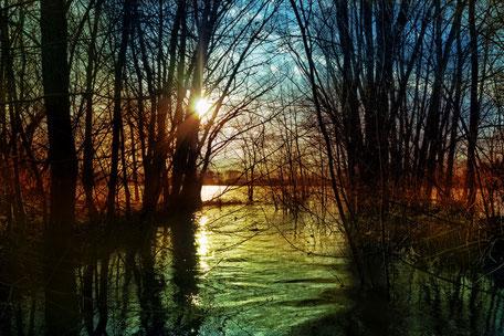 Langsam versinkt die Sonne hinter silhouettenhaften Bäumen im See