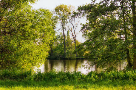 natur-am-main-fluss-fruehling