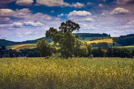 huegelige-landschaft-felder-und-baeume
