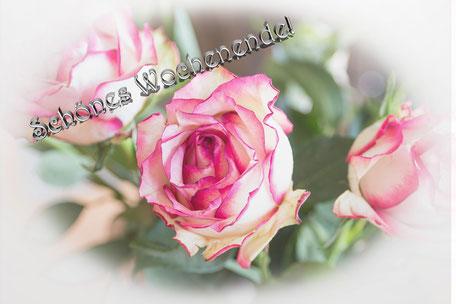 spruchkarte-schoenes-wochenende-rose-weiss-rosa-vignette