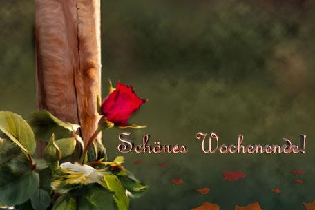 spruchkarte-schoenes-wochenende-rose