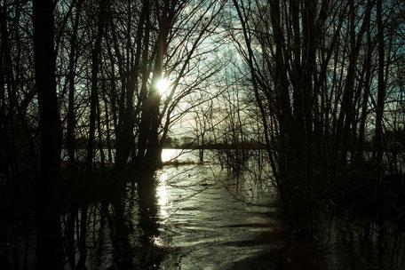 Langsam versinkt die Sonne hinter silhouettenhaften Bäumen am See