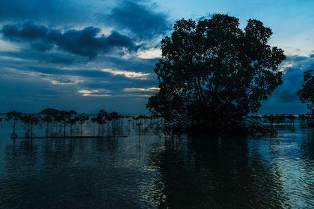 mangroven-in-wok-tum-koh-phangan