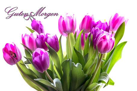 grusskarte-guten-morgen-tulpen-schleife