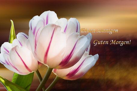guten-morgen-grusskarte-tulpen