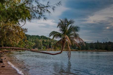 palme-im-meer-koh-phangan