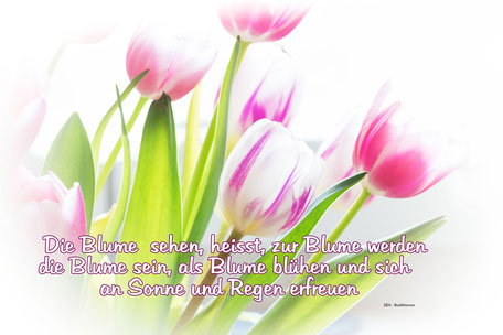 spruchkarte-grusskarte-die-blume-sehen-zarte-tulpen-weiss-rosa-vignette