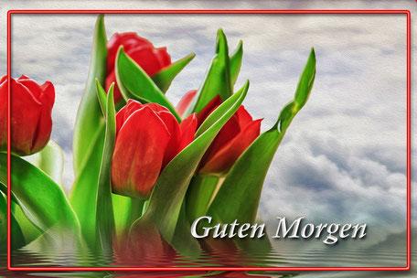 guten-morgen-gruss-tulpen-gerahmt