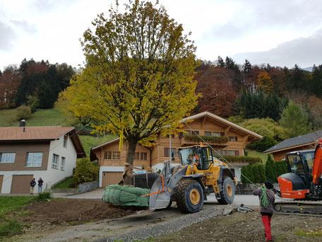 Grossbaumverpflanzung, Henzelmann Baumpflege